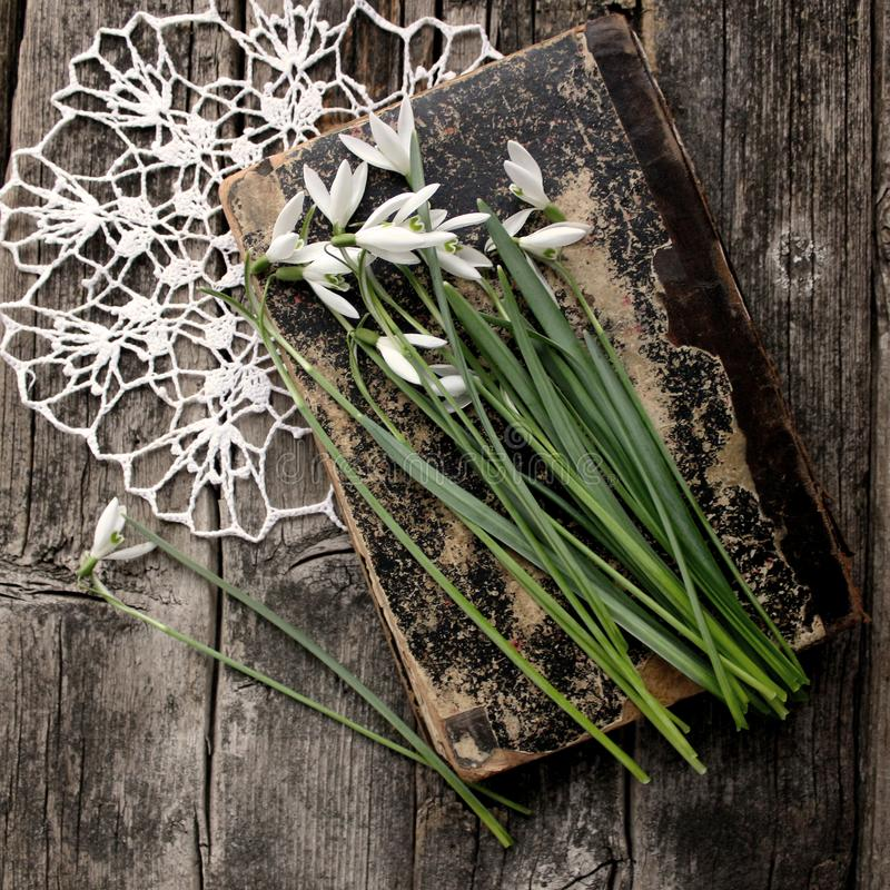Galantuses,白色snowdrops,在葡萄酒葡萄酒木背景的第一朵春天花 库存图片