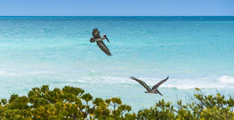 Galapagos öar av Ecuador, South America royaltyfri fotografi