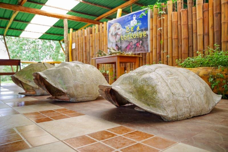 GALAPAGOS, ΙΣΗΜΕΡΙΝΟΣ 11 ΝΟΕΜΒΡΙΟΥ, 2018: Υπαίθρια άποψη του γιγαντιαίου Galapagos κοχυλιού χελωνών, που βρίσκεται μέσα ενός κτηρ στοκ φωτογραφία με δικαίωμα ελεύθερης χρήσης