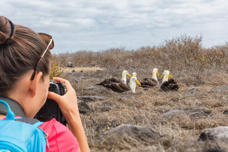 Galapagos τουρίστας που παίρνει τις εικόνες του κυματισμένου άλμπατρος στο νησί Espanola στοκ φωτογραφίες με δικαίωμα ελεύθερης χρήσης