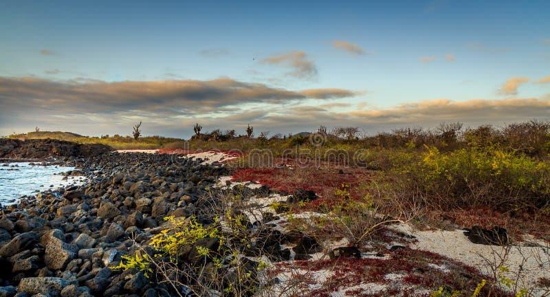 galapagos photo stock