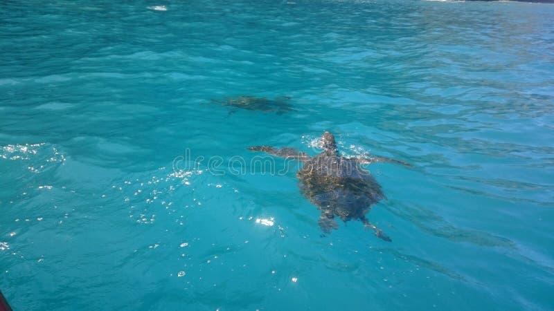 Galapagos-Inseln stockfoto