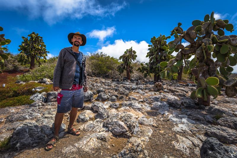 Galapagos Islands - August 24, 2017: Endemic cactuses in Plaza Sur island, Galapagos Islands, Ecuador stock photography