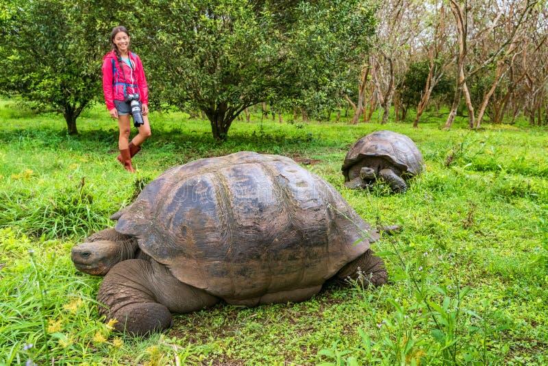 Galapagos jätte- sköldpadda och turist- kvinna på Santa Cruz Island Galapagos royaltyfria foton