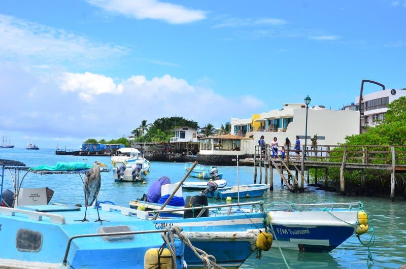 Galapagos-Postkarte auf Santa Cruz Island lizenzfreies stockfoto