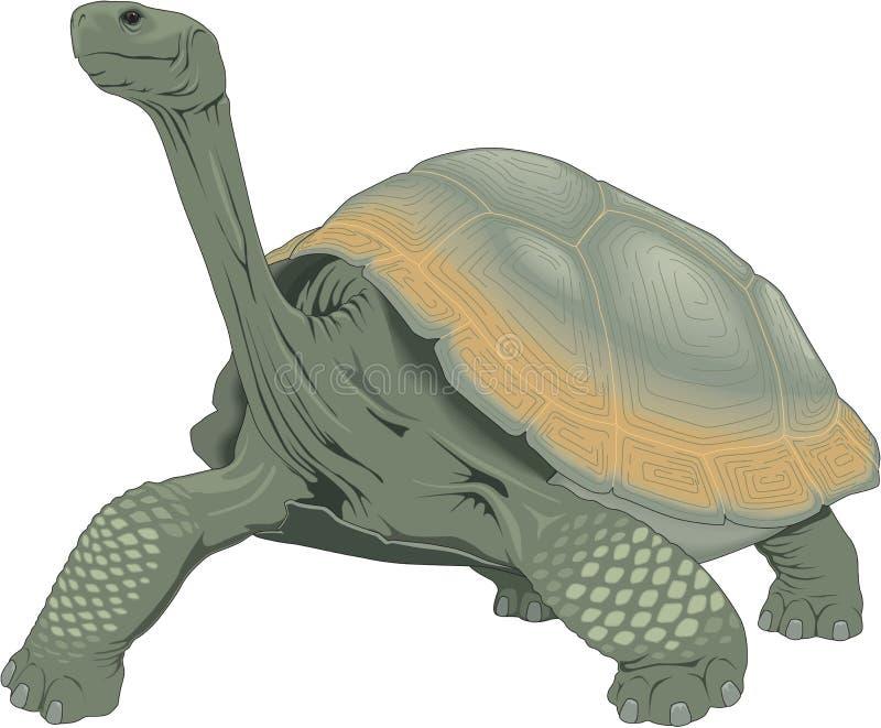 Galapagos-Schildkröten-Illustration stock abbildung