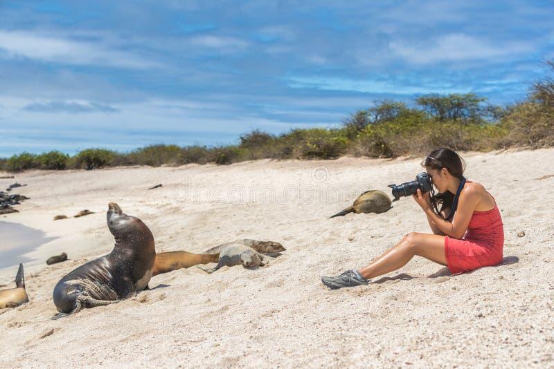Galapagos turist som tycker om se sammanträde, genom att fotografera för Galapagos sjölejon royaltyfria bilder