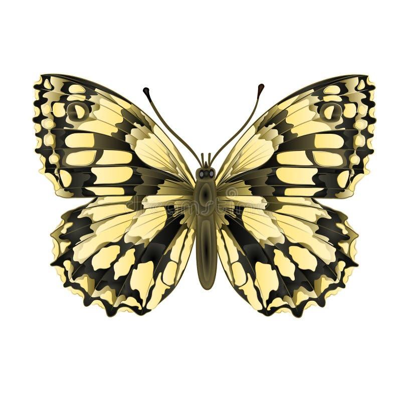 Galatheavector van vlindermelanargia stock illustratie