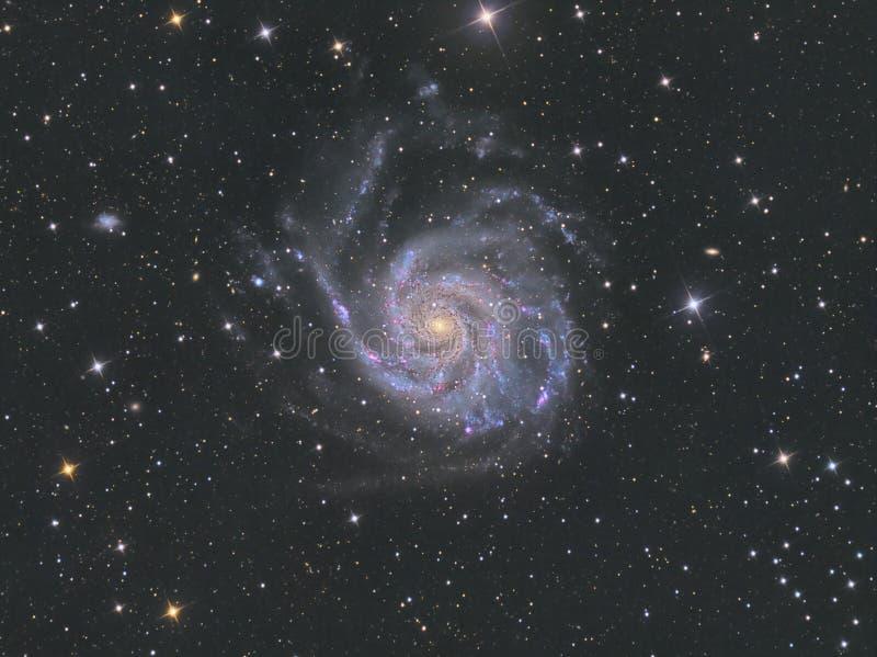 Galax för liten sol M101 royaltyfri foto
