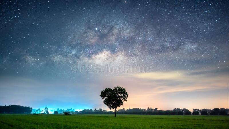 Galax för mjölkaktig väg med hjärtaformträd i risfältfält arkivbild