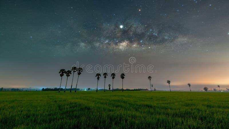 Galax för mjölkaktig väg med palmträd i risfältfält royaltyfri bild