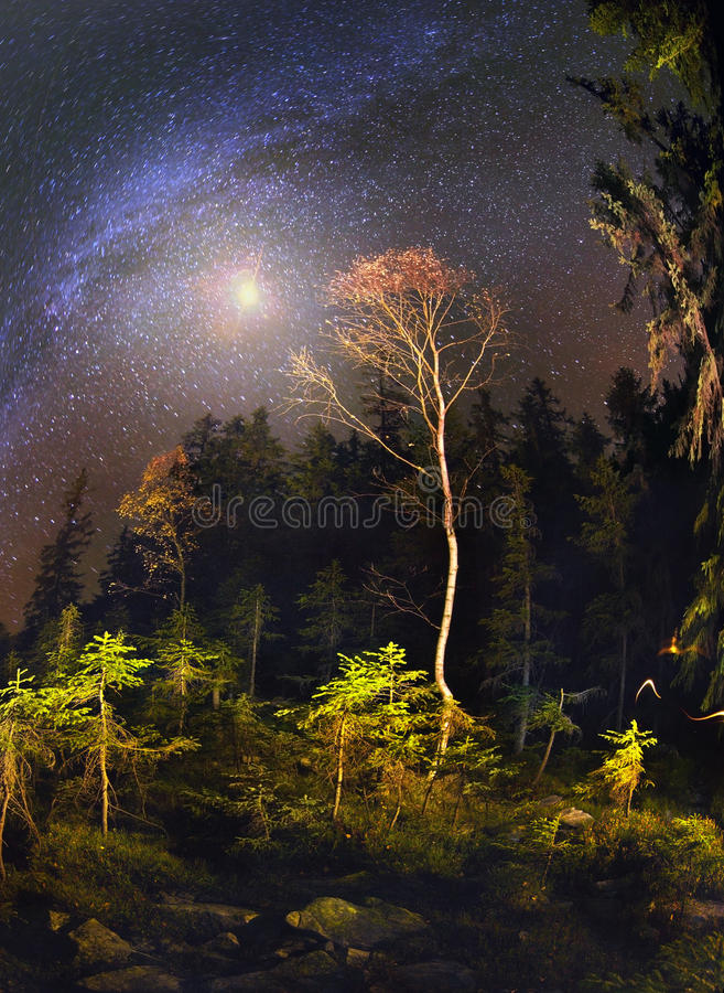 Galaxy and fall. Transcarpathian wild forests warm autumn covered with gold leaf, quietly waiting for the arrival of the cold winter days. Three weeks of Indian royalty free stock photography