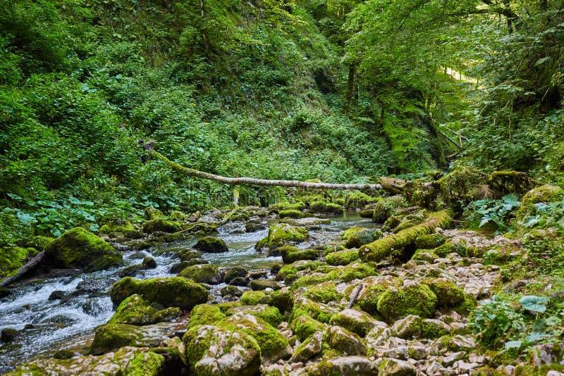 Galbena河和峡谷 免版税图库摄影