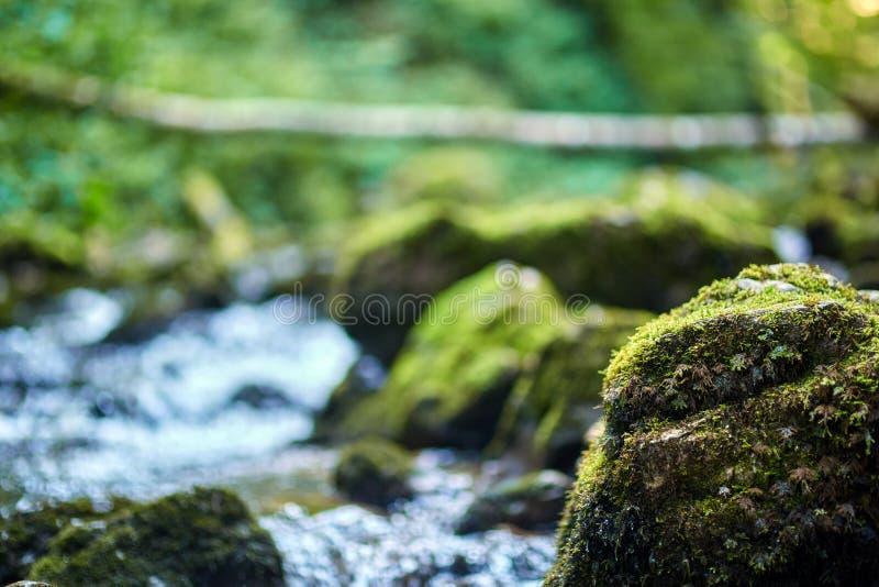 Galbena河和峡谷 图库摄影