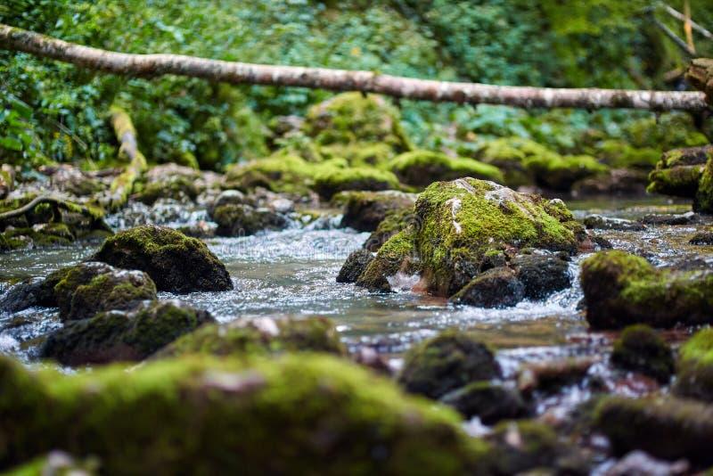 Galbena河和峡谷 库存图片