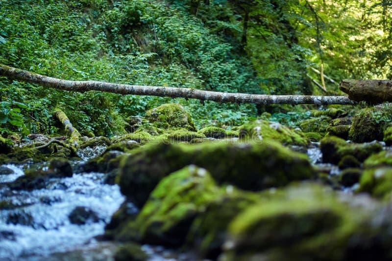 Galbena河和峡谷 免版税库存照片