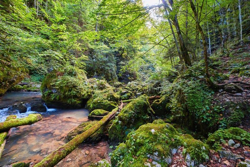 Galbena河和峡谷 免版税库存图片