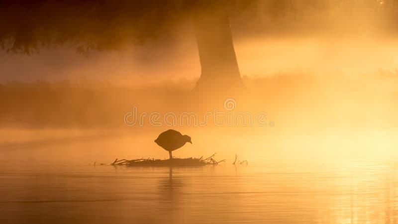Galeirão no nascer do sol