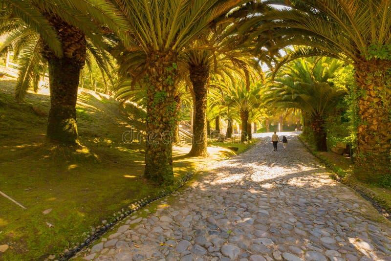 Galería de palmeras en el parque Quito de Guapulo fotografía de archivo
