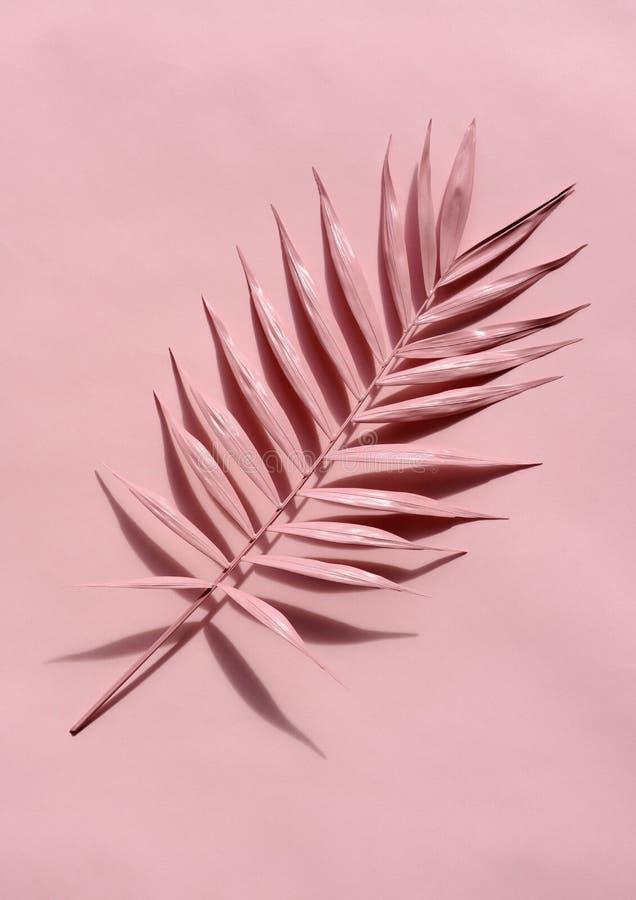 Galho cor-de-rosa da palma imagens de stock