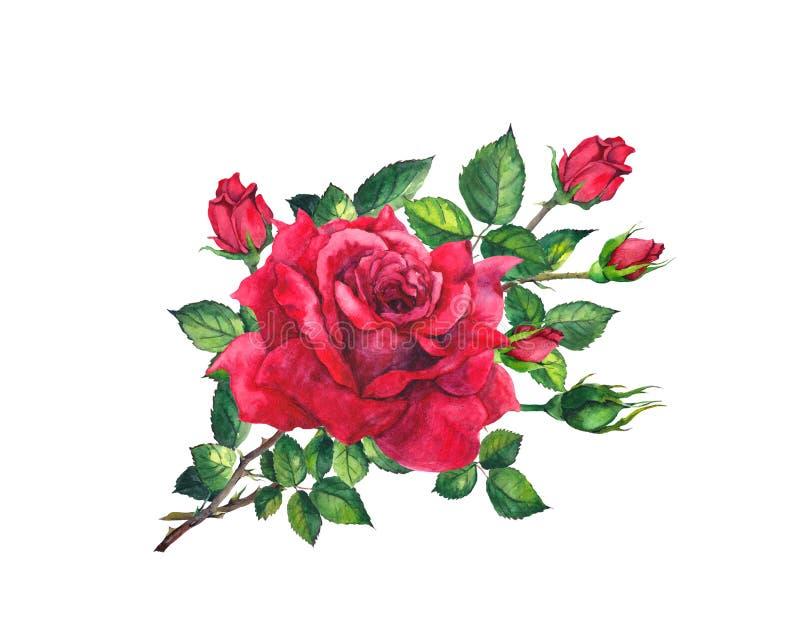 Galho cor-de-rosa vermelho com flores, folhas, botões Florescência floral da aquarela ilustração do vetor