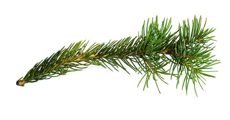 Galho da árvore de Natal fotos de stock royalty free