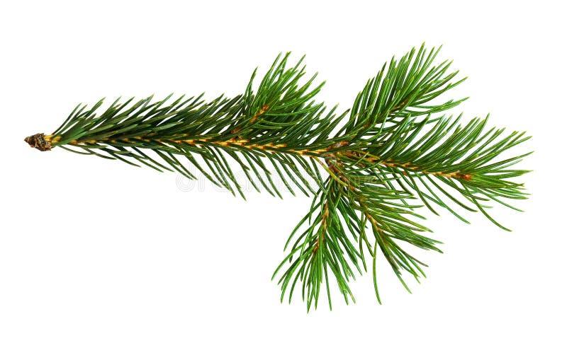 Galho da árvore de Natal fotografia de stock