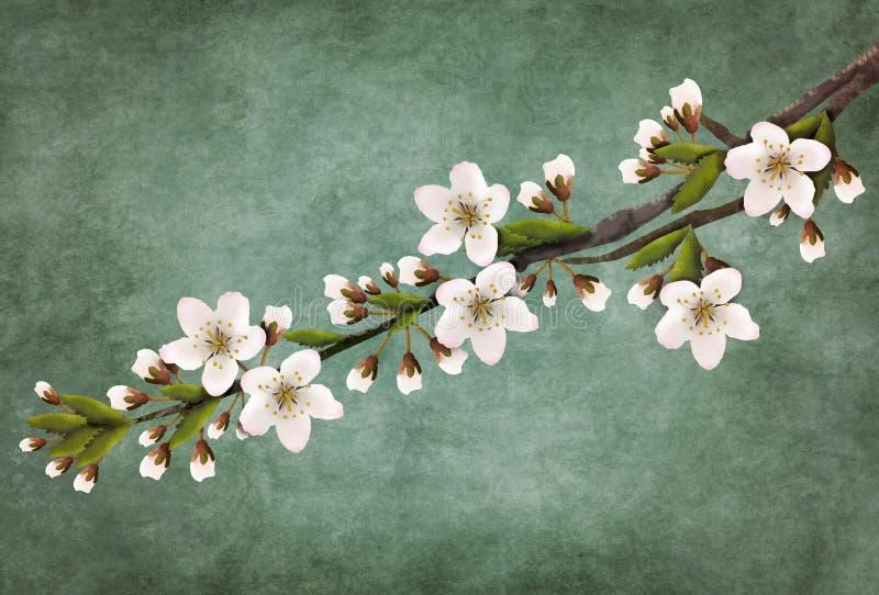 Galho das flores de cerejeira de florescência para a decoração ilustração royalty free