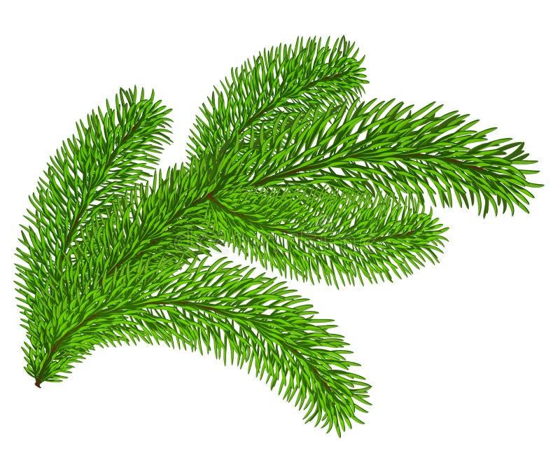 Galho de sempre-verde ilustração stock