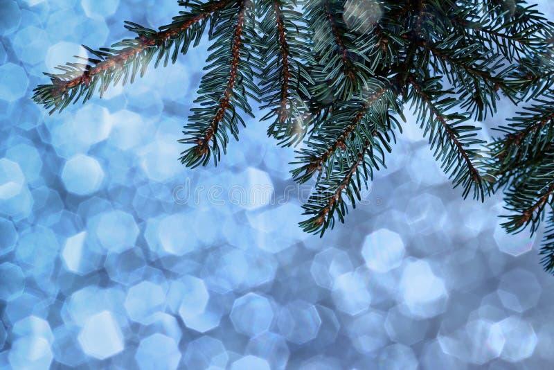 Galho do abeto na frente de um fundo de brilho azul imagem de stock