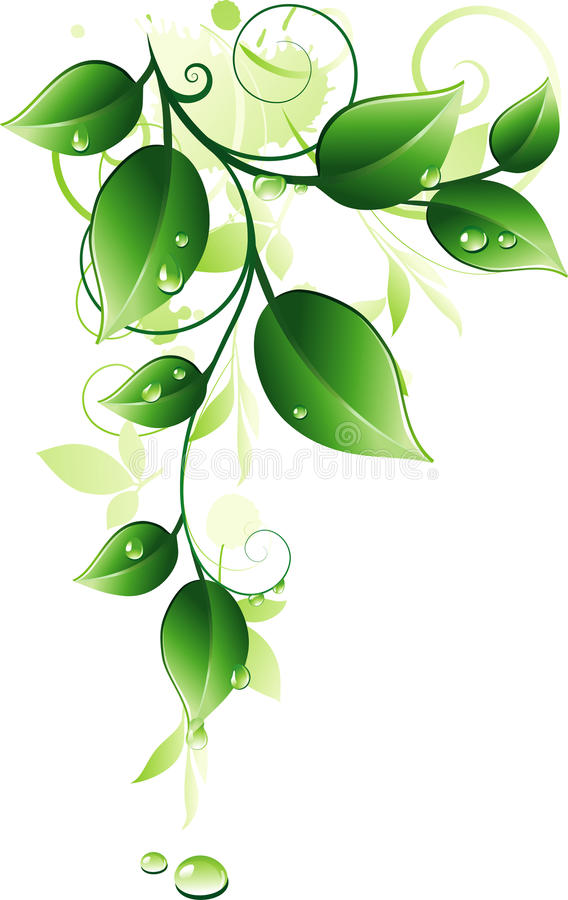 Galho verde ilustração do vetor