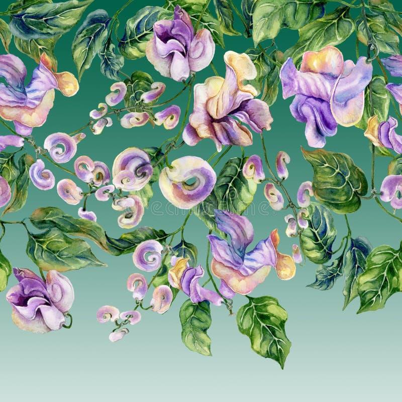 Galhos bonitos da videira do caracol com as flores roxas no fundo verde Teste padrão floral sem emenda, beira Pintura da aguarela ilustração stock