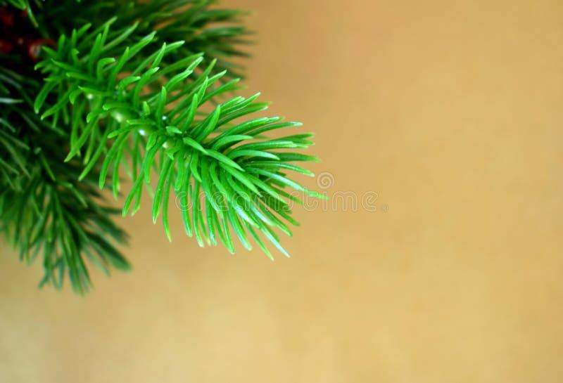 Galhos da árvore de abeto em um papel do ofício fotos de stock royalty free