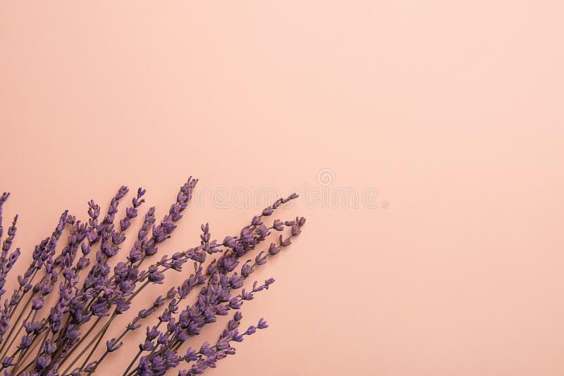 Galhos das flores da alfazema arranjadas na mais baixa beira no fundo cor-de-rosa contínuo Cosméticos do bem-estar do casamento d imagem de stock