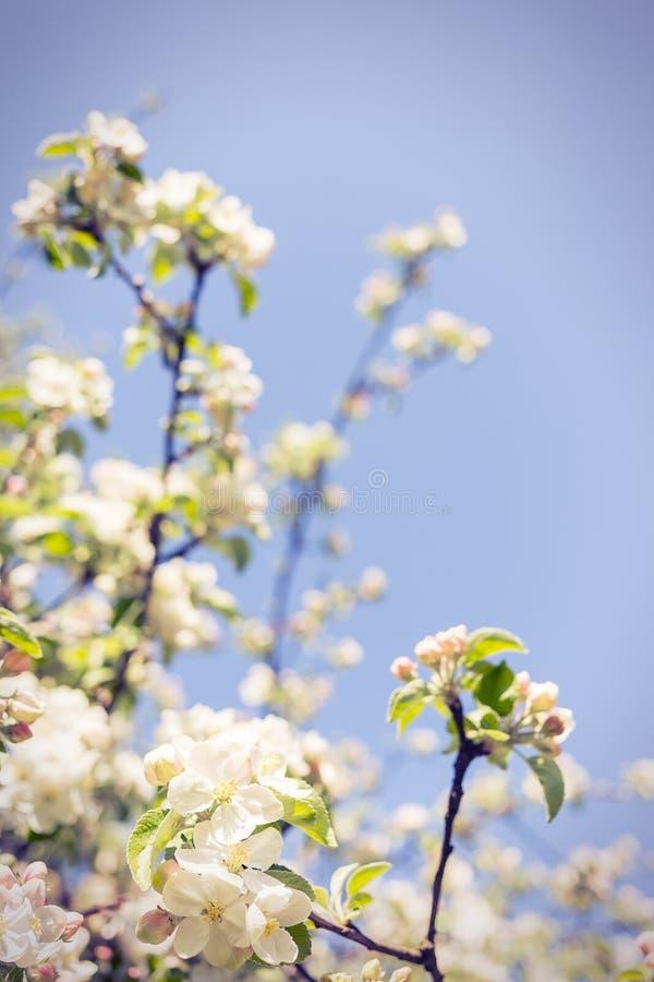 Galhos de florescência foto de stock