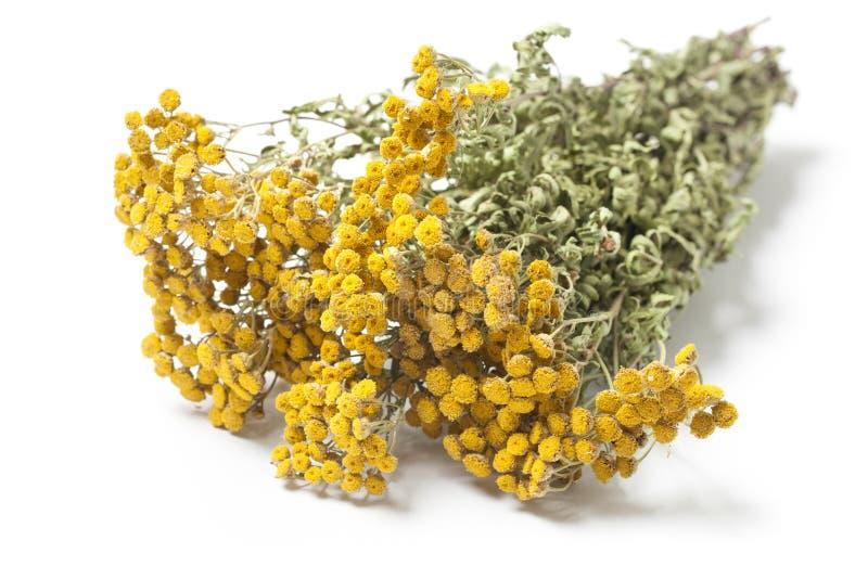 Galhos de Herb Tansy secado foto de stock royalty free