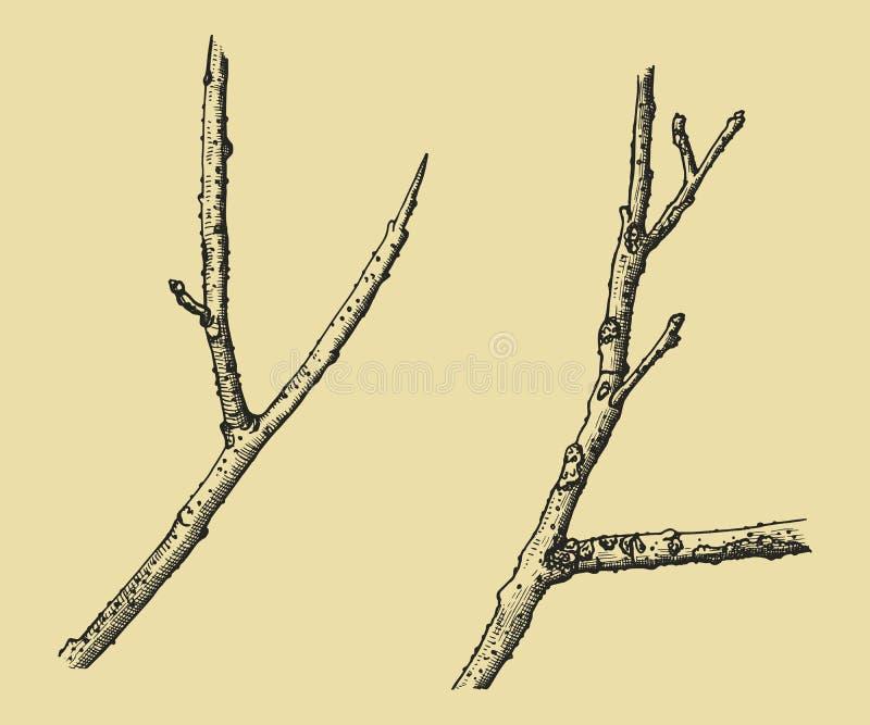 Galhos secos da árvore Vetor do esboço do desenho da mão ilustração stock