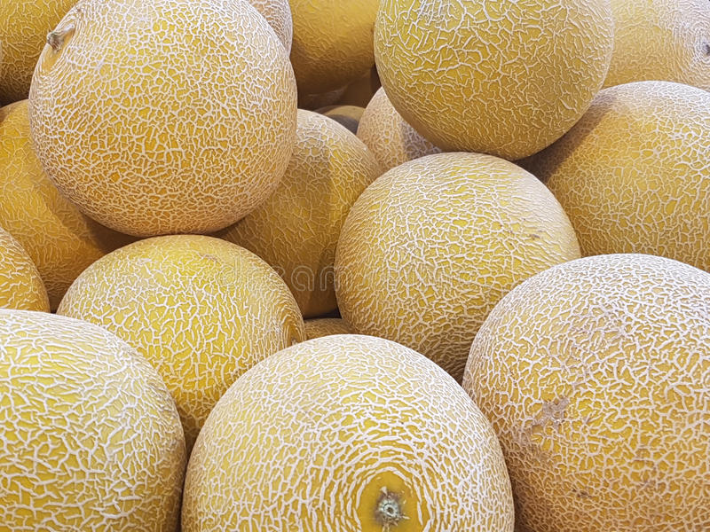 Galia melons royalty free stock photo