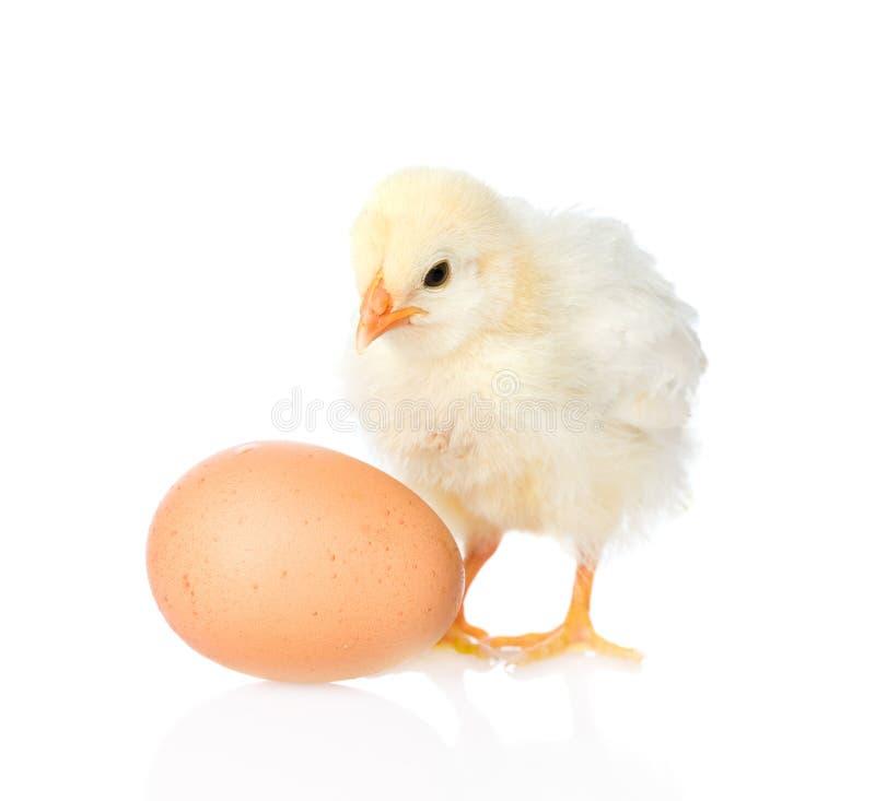 Galinha bonito com ovo Isolado no fundo branco imagem de stock