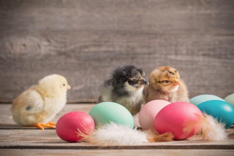 Galinha com os ovos da páscoa no fundo de madeira imagem de stock royalty free