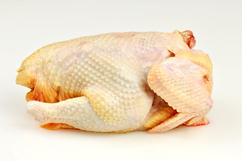 galinha crua fotografia de stock royalty free
