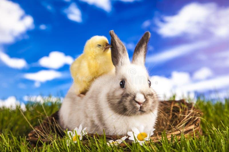 Galinha e coelho da Páscoa imagem de stock