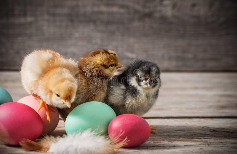 Galinha e ovos da páscoa pequenos no fundo de madeira fotografia de stock royalty free