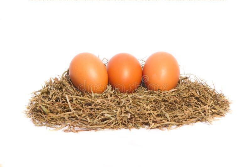 A galinha eggs em um ninho no fundo branco imagem de stock