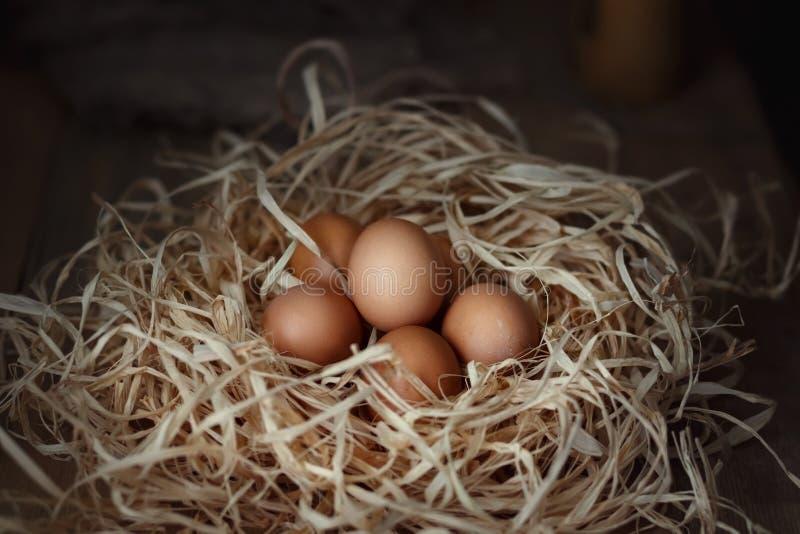 A galinha eggs no ninho da palha em placas de madeira fotografia de stock