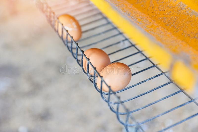Galinha fresca do ovo da agricultura em produtos agrícolas da galinha dentro imagens de stock royalty free