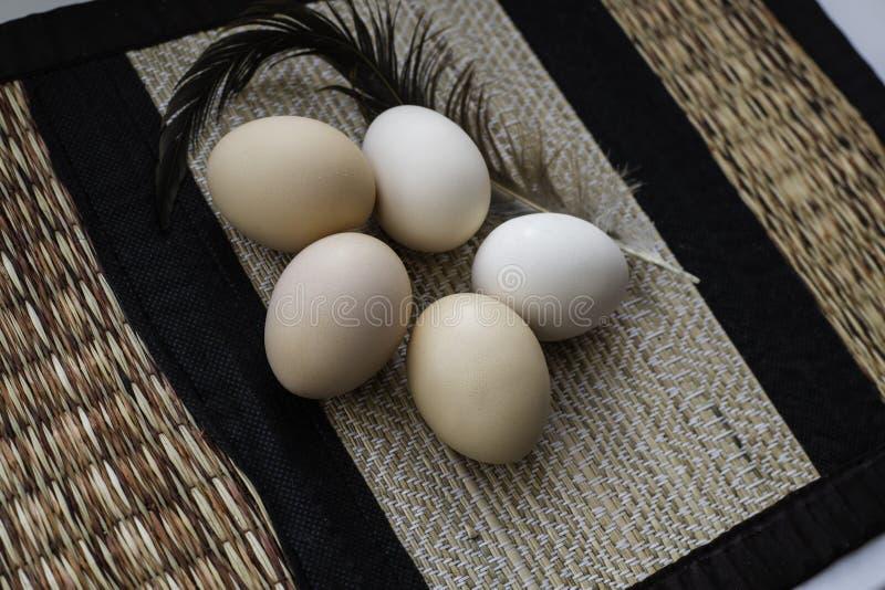 A galinha fresca eggs com a pena do galo no fundo estruturado Vista superior fotografia de stock royalty free