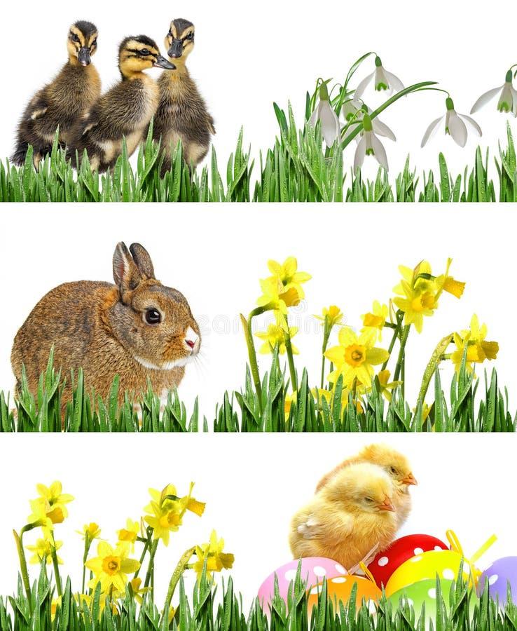 Galinhas, coelho e patinhos e ovos da páscoa recém-nascidos foto de stock royalty free