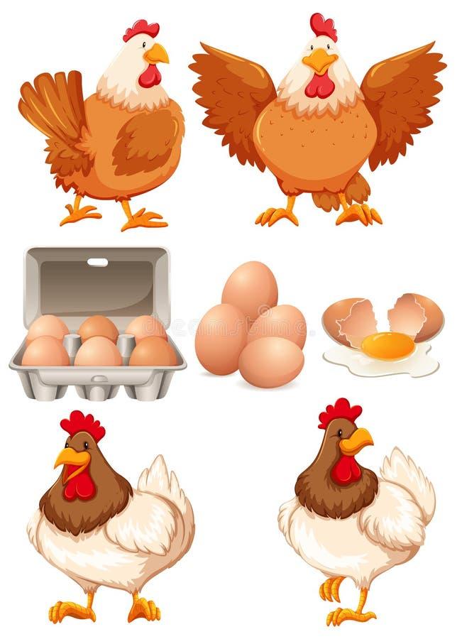 Galinhas e ovos frescos ilustração do vetor
