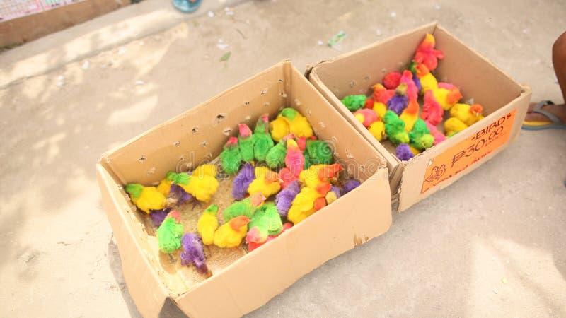 Galinhas pequenas coloridas em uma caixa em um lugar da compra da cidade de Manila filipinas foto de stock royalty free